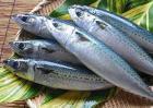 鲭鱼和鲅鱼的区别