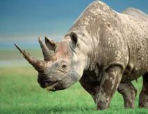 犀牛的种类图片大全