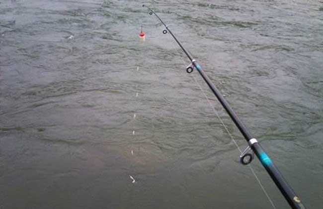 串钩钓鱼技巧