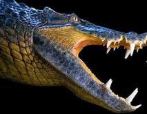 猪鳄真的能吃恐龙吗?
