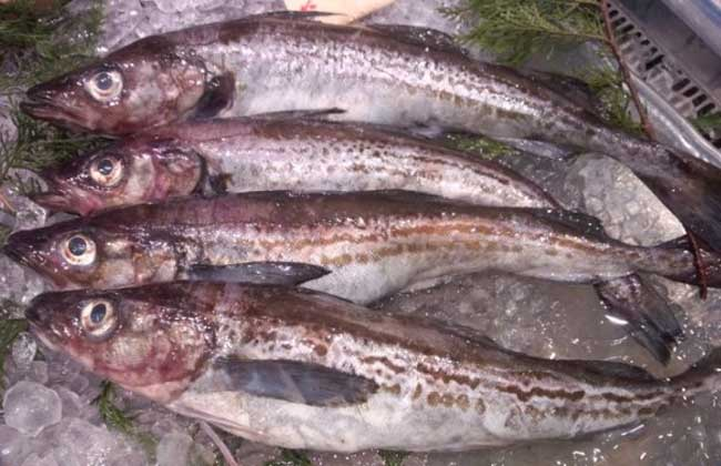 鳕鱼的营养价值
