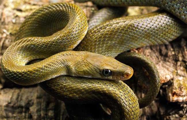 打蛇打七寸
