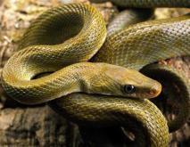 打蛇打七寸是指哪里?