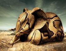人心不足蛇吞象是什么意思?