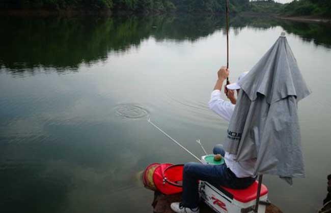 黑坑钓鱼技巧