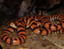 蛇的种类名称及图片大全