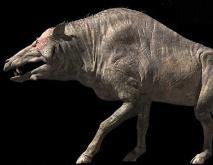 巨猪是怎么灭绝的?