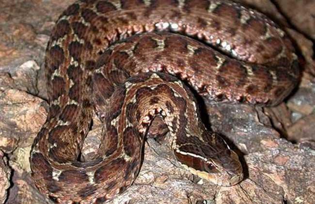 蛇的天敌有哪些?