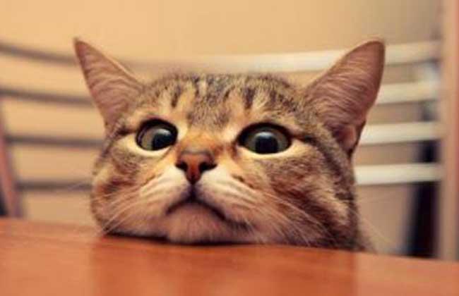 猫科动物种类图片大全