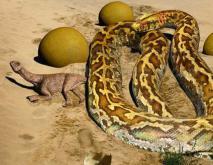 沃那比蛇怎么灭绝的?