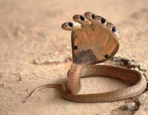 五头蛇是真的吗?