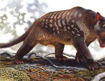 已灭绝的动物名称及图片大全