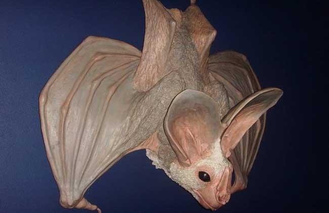 蝙蝠是哺乳动物吗