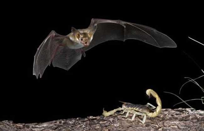 蝙蝠进屋有什么预兆?