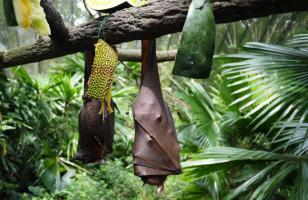蝙蝠是胎生还是卵生?