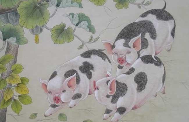 1971年属猪人一生的命运