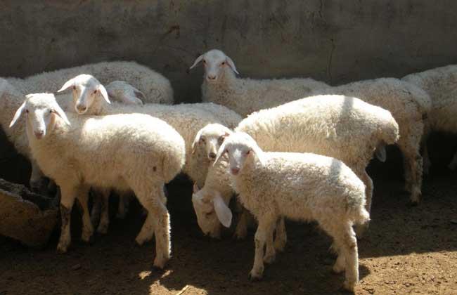 2018年农村养羊补贴政策