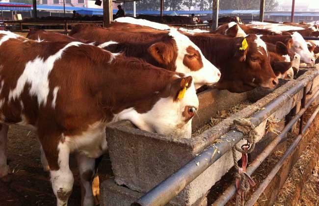 养牛补贴政策