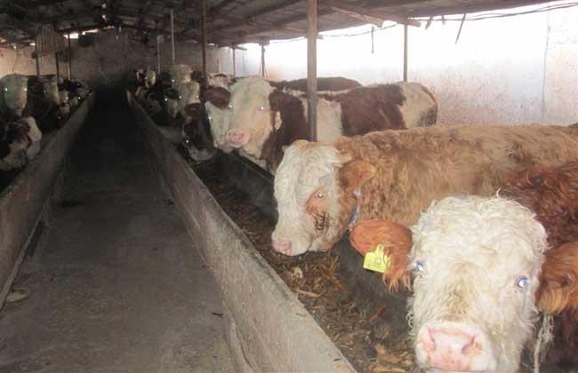 养10头牛一年能赚多少钱