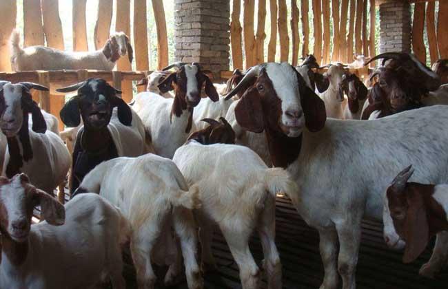 养50只羊赚多少钱
