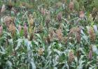 2017种植什么农作物好?