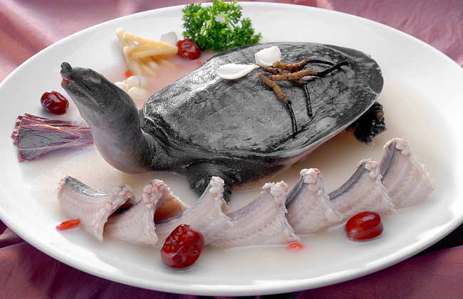 虫草红枣炖甲鱼