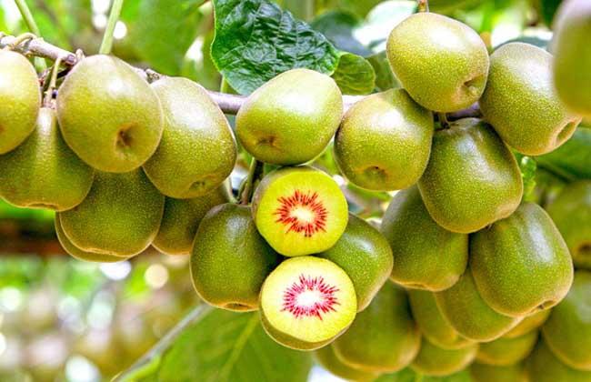 红心猕猴桃多少钱一斤