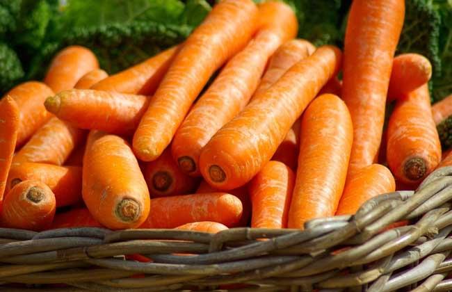 胡萝卜的功效与作用及禁忌