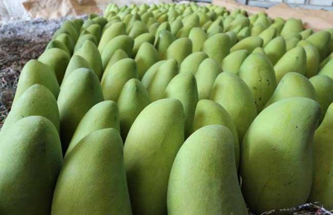 金煌芒果多少钱一斤