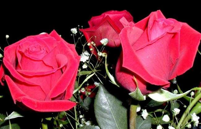 九十九朵玫瑰多少钱