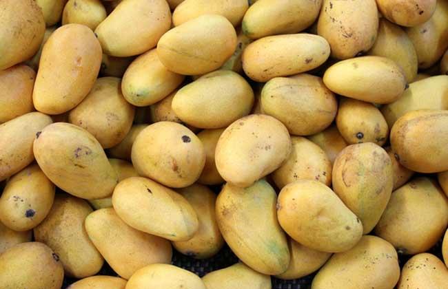 芒果皮能吃吗