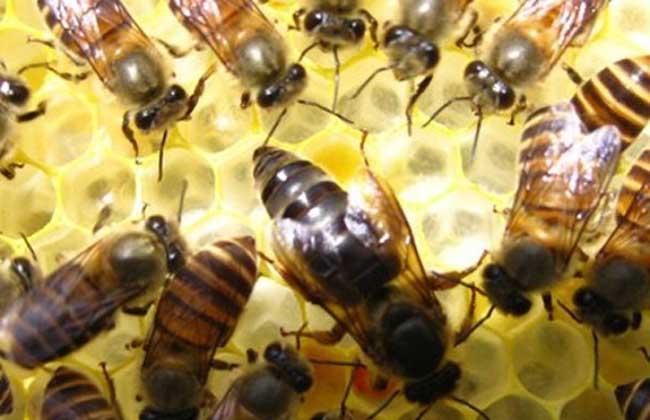 蜜蜂什么时候繁殖快