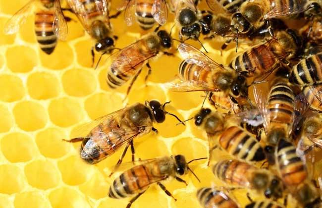 蜜蜂为什么不会迷路?