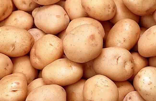 土豆什么时候进入中国