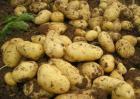 土豆什么时候进入中国?