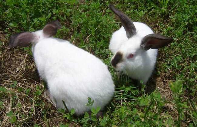 兔子怎么养才不会死?