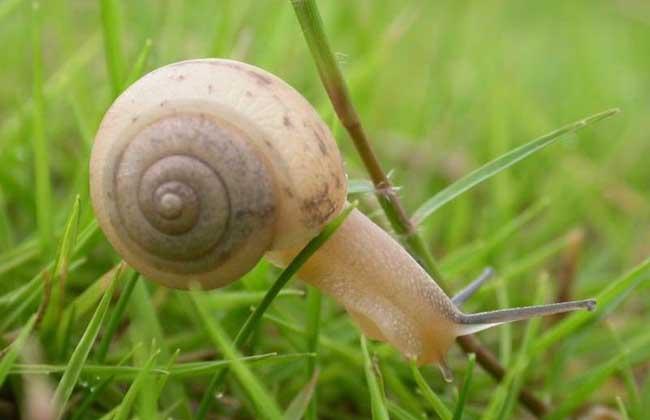 蜗牛怎么养才不会死?