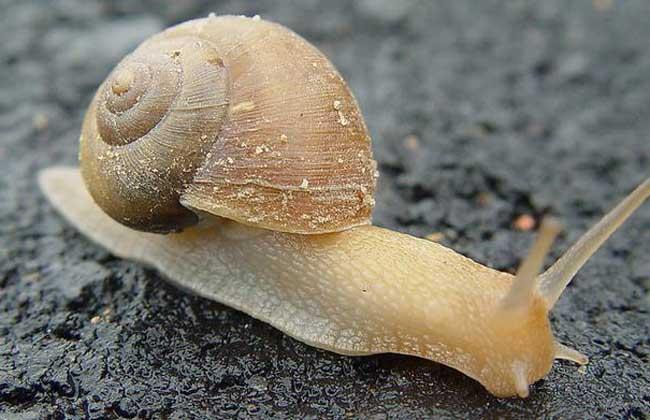 蜗牛怎么养