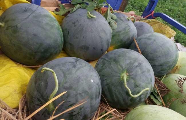 无籽西瓜多少钱一斤