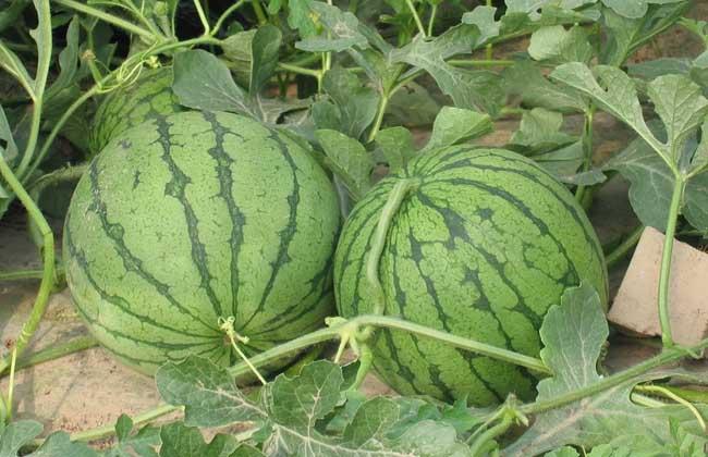 西瓜能和桃子一起吃吗