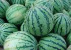 西瓜是热性还是凉性?
