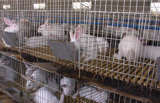 养兔子赚钱吗