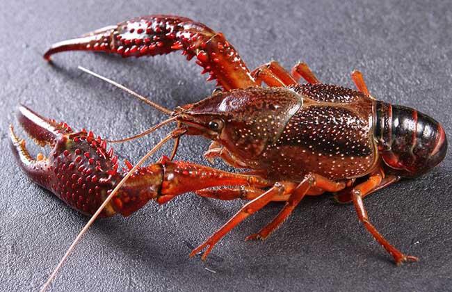 小龙虾怎么去掉虾线?