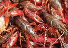 小龙虾算不算是海鲜?