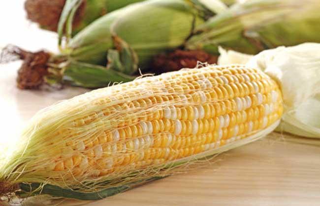 血糖高能吃玉米吗