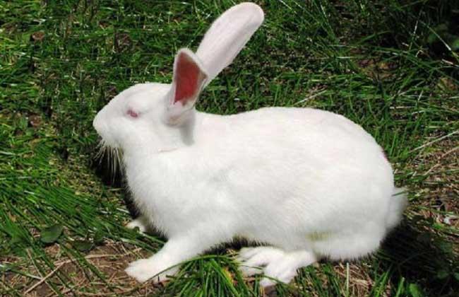 野兔和家兔的区别