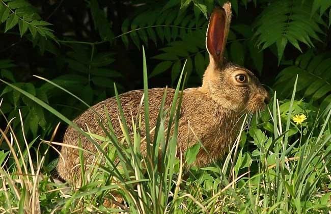 野兔养殖投资多少钱?