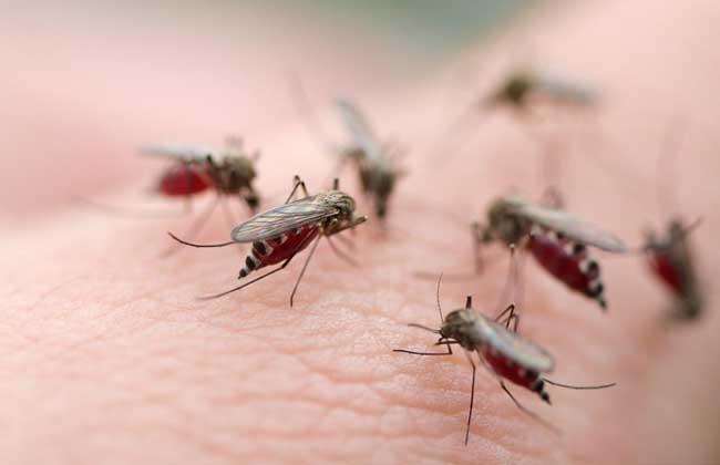 防蚊子的最好办法