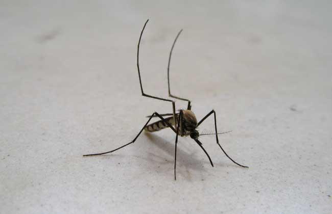 灭蚊子最有效的方法