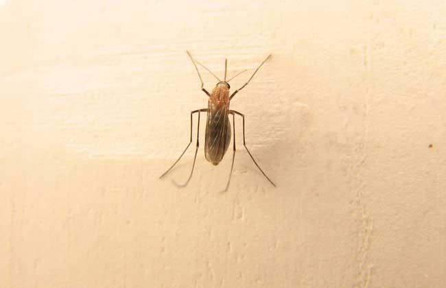 蚊子咬后肿很大怎么办